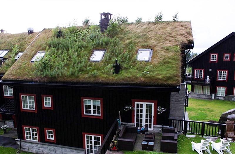 Bajkoviti zeleni krovovi Norveške (9)