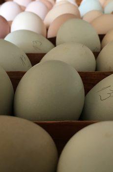 domaca jaja