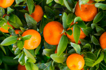 Kolagen i vitamin C