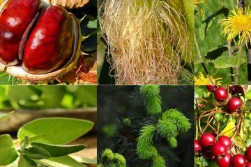 6 biljaka koje jačaju srce i onemogućuju stvaranje plaka1